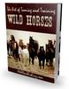 Thumbnail wild Horses
